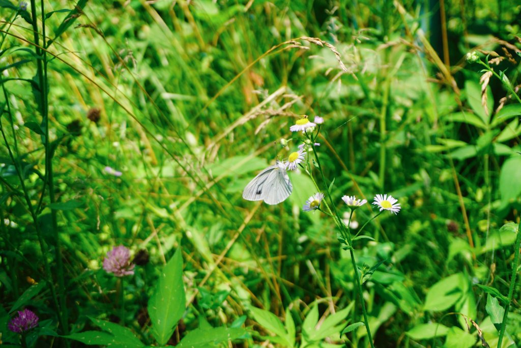 In spring and summertime, butterflies are plentiful.