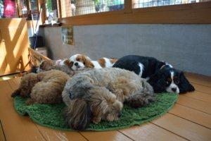 Dogs Kobe Animal Kingdom