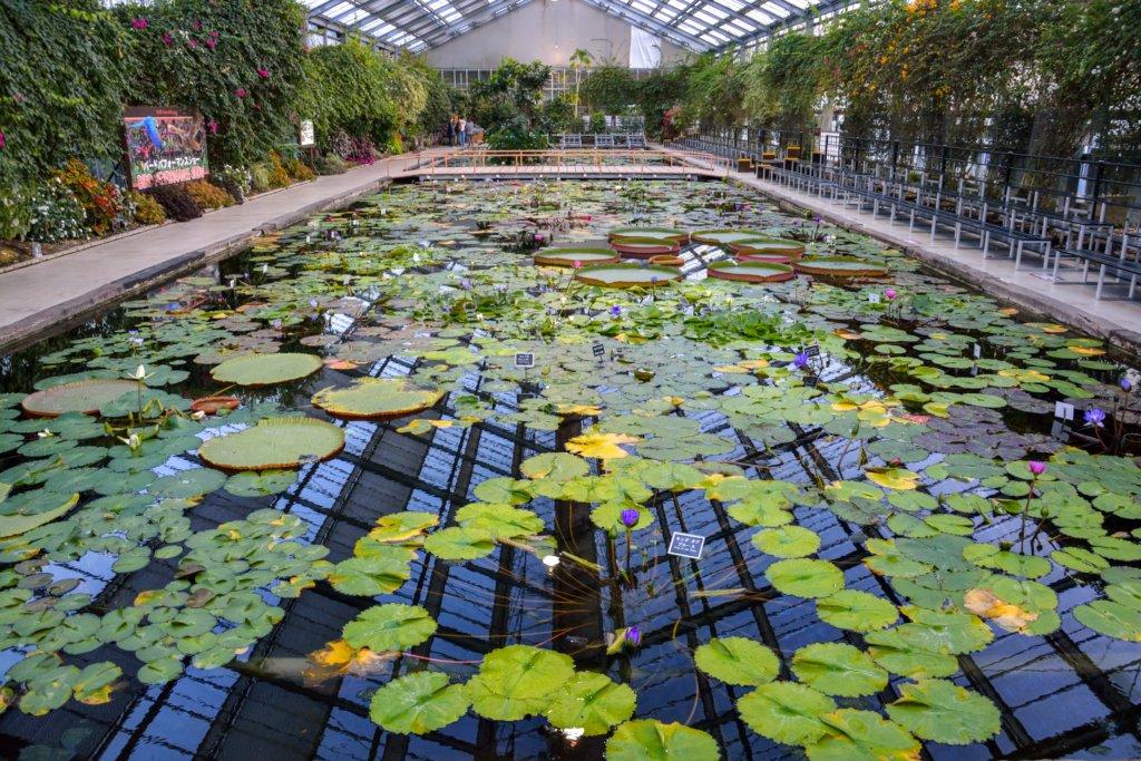 Water Lilies Kobe Animal Kingdom