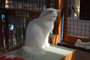 Cat Kobe Animal Kingdom